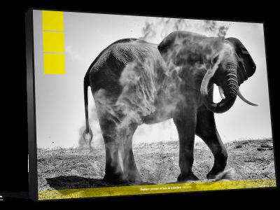 cadre photo elephant
