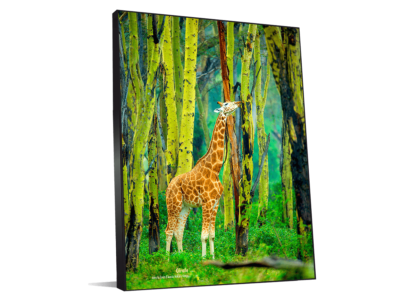 Décoration entreprise photo girafe