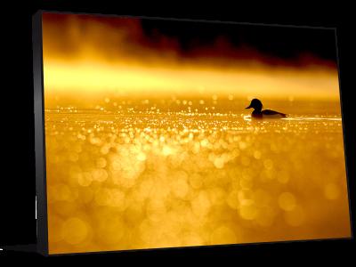 Décoration photo levée soleil