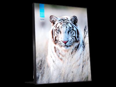 Décoration photo murale tigre